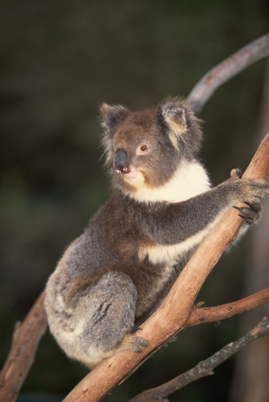 koala essay A catchy title for a college essay can capture the interest of a bored, tired instructor just be certain you aren't being too humorous or off topic with your title, which could result in a lower grade keep the interests of the instructor and other readers in mind when creating catchy titles and.